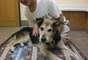 La reacción en Facebook ha sido tal que el can, de 19 años, está recibiendo tratamiento especial para su condición.