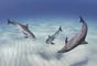 Estos juguetones delfines del Atlántico jugaron unos minutos, lo que le pemritió a John Gaskell entrar al agua y fotografiarlos.