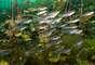 Sempre repleta de peixes, a lagoa Yalkú é uma das opções para quem quer diversão aquática em família