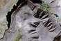 O fenômeno da pareidolia consiste na busca de significado em um estímulo vago - como a identificação do formato de um animal em uma nuvem ou de um rosto em um objeto, por exemplo
