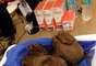 Os veterinários foram capazes de remover com segurança a bola de pelos de 1,8 quilo no estômago do felino