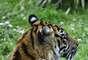 Veja a seguir outros filhotes de espécies consideradas criticamente ameaçadas de extinção - ou em condição até pior