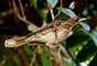 Por isso, é destino dos observadores de aves, que apreciam a beleza dos pássaros e de seus cantos