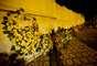 Coroas de flores são colocadas próximas aos túmulos da família Alckmin no Cemitério Municipal de Pindamonhangaba