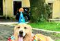 Bloquinhos para pets: leve seu amigo para a folia!