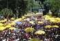 Multidão acompanha Galo da Madrugada em São Paulo.