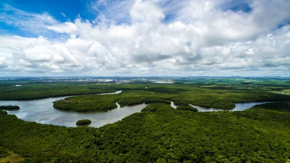 A Floresta Amazônica é questão central no debate ecológico internacional