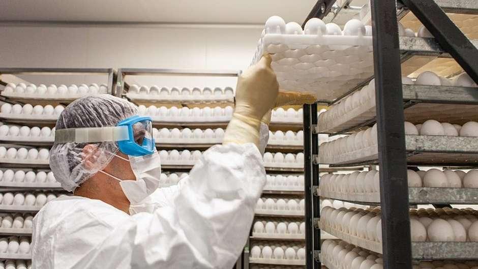 Os desafios da ButanVac, que vai usar 20 milhões de ovos de galinha para produzir 40 milhões de vacinas 27