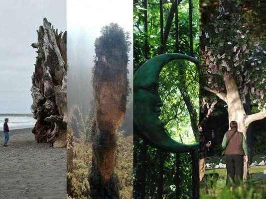 Los parques con los rboles m s impresionantes del mundo - Enorme terras ...