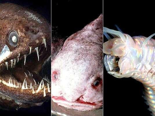 Día de los Océanos: conocé las criaturas más raras del mar