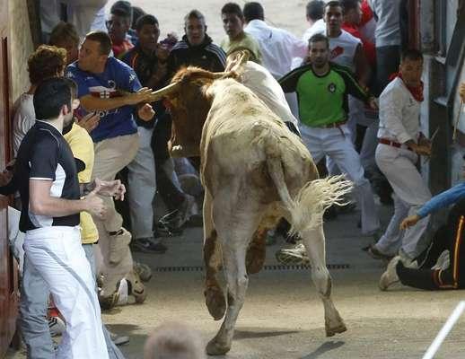 El encierro de San Sebastián de los Reyes de hoy, viernes 31 de agosto, ha finalizado con un gran tapón en la entrada de la plaza en el que han resultado heridos 19 corredores, ninguno por asta de toro. En la imagen, un cabestro alcanza a uno de los participantes en el encierro, sin consecuencias.