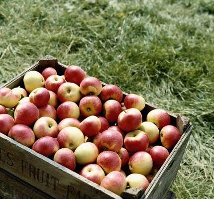 Diminui o colesterol - Uma maçã média possui aproximadamente quatro gramas de fibra. Uma parte disso está na forma de pectina, um tipo de fibra solúvel que tem sido associada a redução dos níveis do colesterol ruim. Isso acontece, pois, de acordo com a 'WebMD', ela bloqueia a absorção de colesterol, ajudando o corpo a usá-lo em vez de armazená-lo