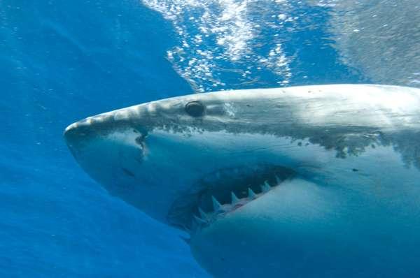 Tubarões encontram-se entre os animais mais temidos do planeta. As chances de ser atacado por um tubarão são relativamente raras. Mas em certos lugares, estatísticas e notícias deixam os turistas com receio, preferindo curtir a praia na areia em vez de entrar na água.Confira 20 praias conhecidas por seus ataques de tubarão