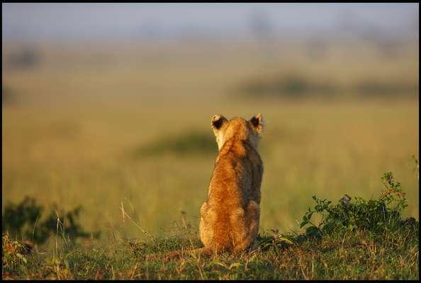 O fotógrafo Serhat Demiroglu registrou um momento curioso na reserva Masai Mara, no Quênia