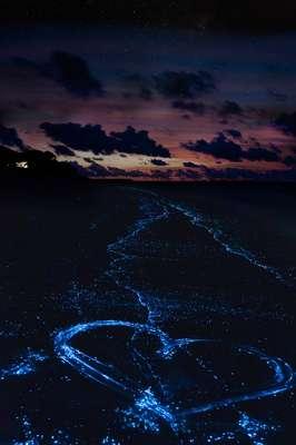 Micro-organismos na água de Bioluminescent Bay brilham quando incomodados. Não por acaso, os turistas alugam o serviço de caiaque para fazer desenhos na água