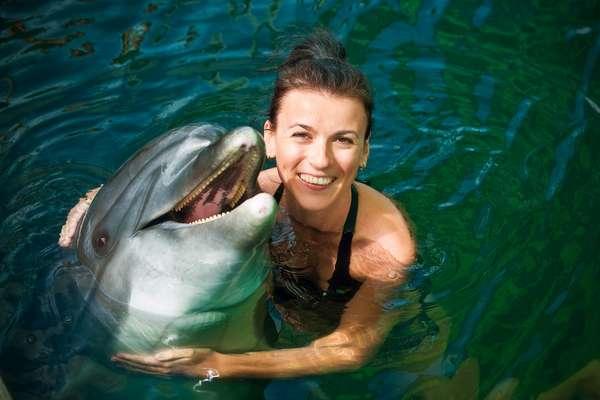 Locais para nadar com golfinhos são fáceis de ser encontrados nas ilhas caribenhas
