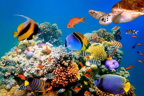 Considerado o maior aquário do mundo, o Sea Aquarium, localizado em Curaçao, possui mais de 800 espécies de animais marinhos