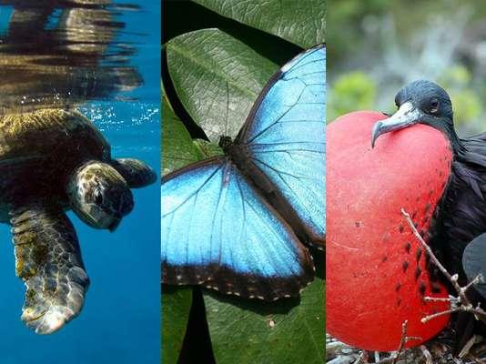 Vida selvagem caribenha é defendida pelos parques nacionais, sempre abertos à visitação dos turistas