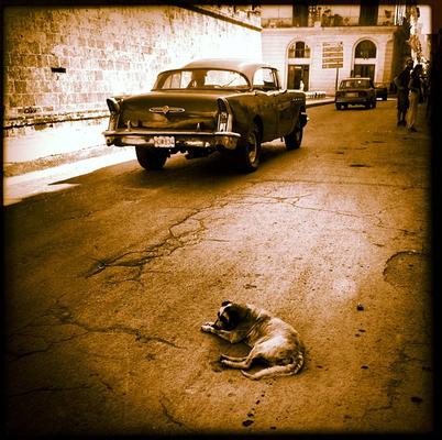 La sensibilidad artística de Eva Amaral para la fotografía se refleja en este perro solitario en medio de la carretera.