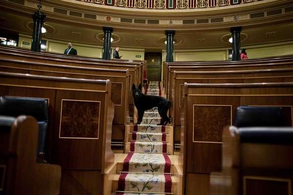 En solo un día decenas de imágenes han hecho noticia. En España, un perro policía revisa el hemiciclo del Congreso de los Diputados antes del comienzo de la sesión del debate sobre el estado de la nación. Vea más fotos impactantes en el mundo.
