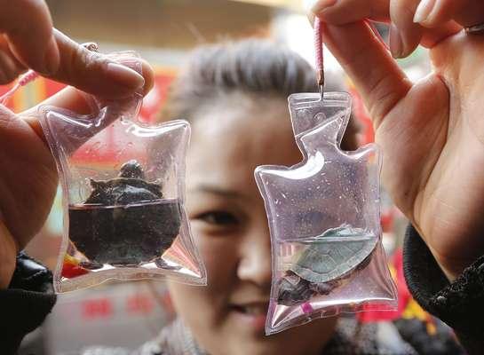 Mulher posa com tartarugas carregadas vivas em pequenos sacos plásticos que comprou em Pequim. Cada bolsa dessas, preenchida com oxigênio e um líquido nutritivo, pode manter o animal alimentado durante dois meses