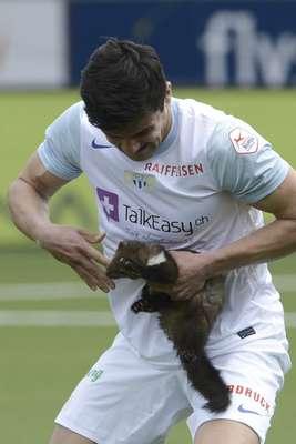 A partida entre FC Zurich e FC Thun, pelo Campeonato Suíço, no último domingo, contou com um invasor inesperado. Uma fuinha adentrou o gramado, paralisou o jogo por instantes e até mesmo mordeu um jogador