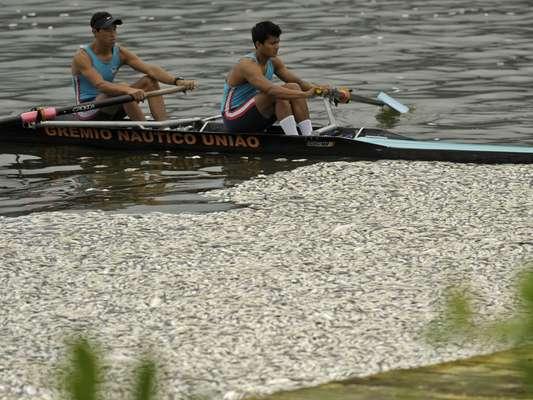 Toneladas de peixes mortos atrapalharam a seletiva para formação da Seleção Brasileira de remo nesta quinta-feira, na Lagoa Rodrigo de Freitas, no Rio de Janeiro; veja