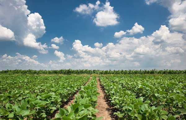 China consome cerca de 66% da produção de soja brasileira