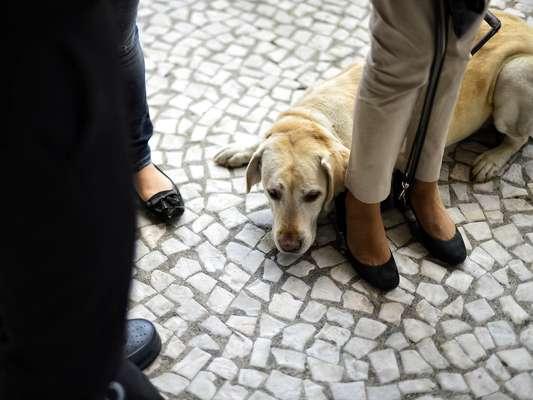 Deficientes visuais, acompanhados por seus cães-guias, percorreram a avenida Paulista nesta quarta-feira