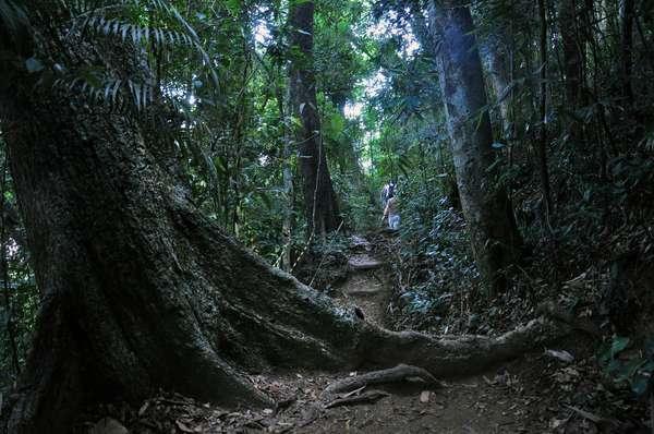Floresta da TijucaAcostumados a viver em sintonia com a natureza, os cariocas tem numerosos pontos para curtir as belezas da região. Uma delas é a Floresta da Tijuca, terceira maior área verde urbana do Brasil, com mais de 3.800 hectares de densa vegetação, morros, trilhas e grutas