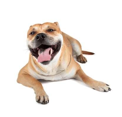 Mesmo com as pessoas tendo cada vez mais consciência sobre as necessidades de cães e gatos, a boca dos bichinhos ainda é negligenciada