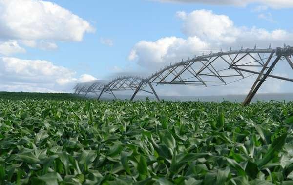 Para aumentar a produtividade, agricultor deve, primeiramente, trabalhar com rotação de culturas. Essa medida já reduz erosão e proliferação de pragas