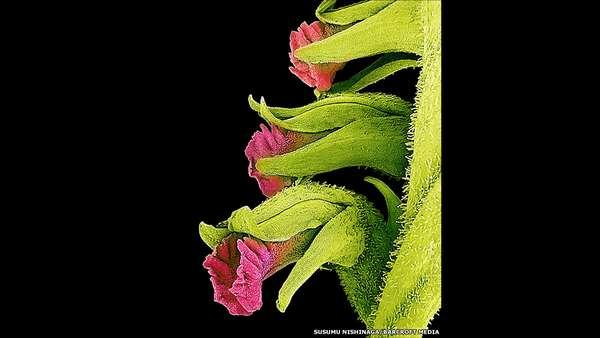 O artista japonês Susumu Nishinaga usou um microscópio para esmiuçar os detalhes estéticos de pétalas, folhas e pólen