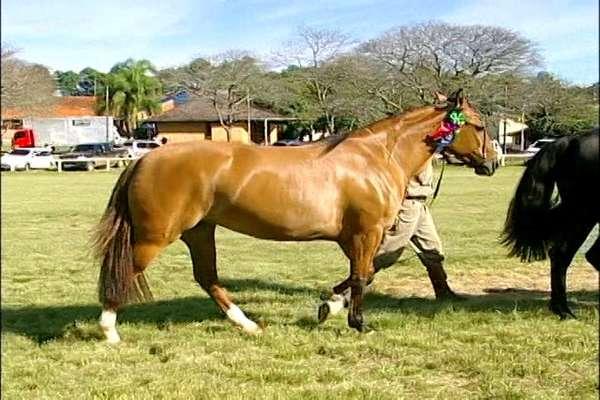 Objetivo das exigências no transporte de equinos é frear as doenças e controlar a sanidade animal