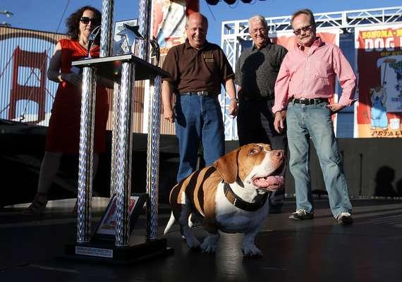 Walle, o vencedor do 25º Concurso Anual de Cachorro Mais Feio, caminha no palco logo após receber seu troféu