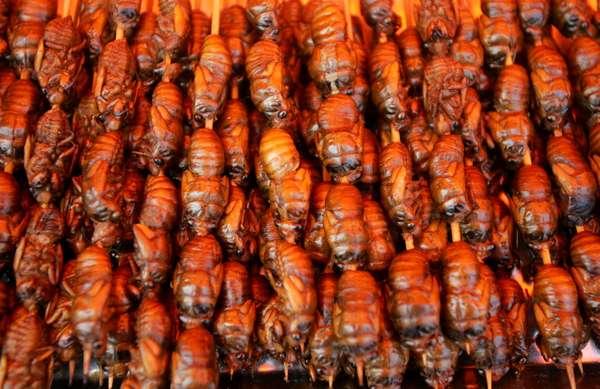 Cigarras fritas são vendidos em mercado na China. A ONU defende o aumento do uso de insetos na dieta da população mundial