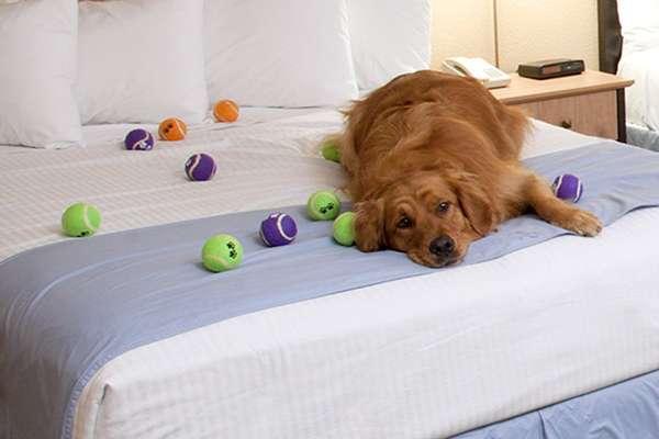 Best Western Fallsview Hotel, Canadá: situado a poucos passos do Parque Queen Victoria e das Cataratas do Niágara, o hotel Best Western Fallsview recebe bem os cachorros desde a sua chegada. Na recepção, os cães ganham biscoitos e uma sacola de viagem com brinquedos e guloseimas caninas. Diárias a partir de R$ 192 para humanos e R$ 52 para cachorros