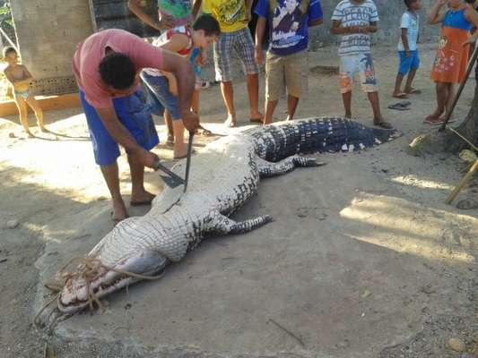 Dois homens foram multados em R$ 5 mil depois de matar em público um jacaré de 5 metros de comprimento Brejo Grande do Araguaia, no sul do Pará. A agressão foi testemunhada por diversas pessoas, inclusive crianças
