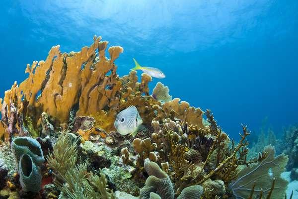 A ilha de Roatán, em Honduras, é um paraíso caribenho ideal para quem gosta de observar a vida marinha