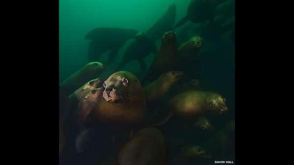 Uma exposição do fotógrafo David Hall em Vancouver reúne imagens impressionantes da vida aquática dos rios e da costa canadense.