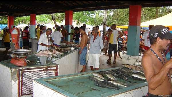 Um estudo realizado no sul da Bahia revelou que sete espécies de peixe anteriormente comuns na região estão desaparecendo. A pesquisa ouviu pescadores no Mercado da Tarifa, em Porto Seguro