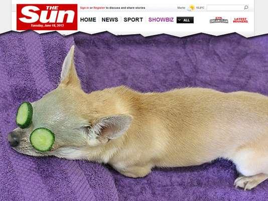Segundo o jornal Daily Mail, o petshop Pawfection, na Inglaterra, cobra até 100 libras, mais de R$ 300, por uma sessão de embelezamento