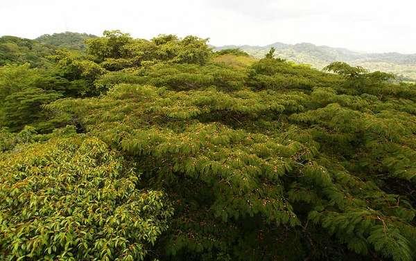 Com mais de 100 hectares de selva tropical preservadas, a floresta de Gamboa fica na cidade que lhe dá nome, junto à capital do Panamá, e é uma das mais belas atrações naturais do país