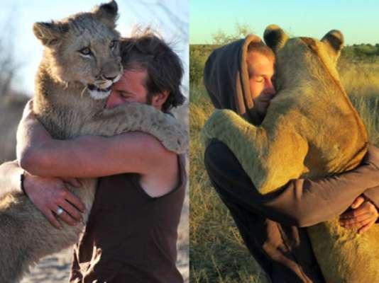 Uma leoa vivendo em seu selvagem habitat natural desenvolveu um laço afetivo com dois homens que a resgataram quando ainda era filhote
