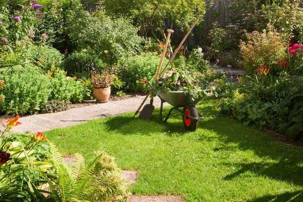Plantar uma horta com os temperos mais comuns significa ter vegetais sempre frescos e plantas bonitas no jardim