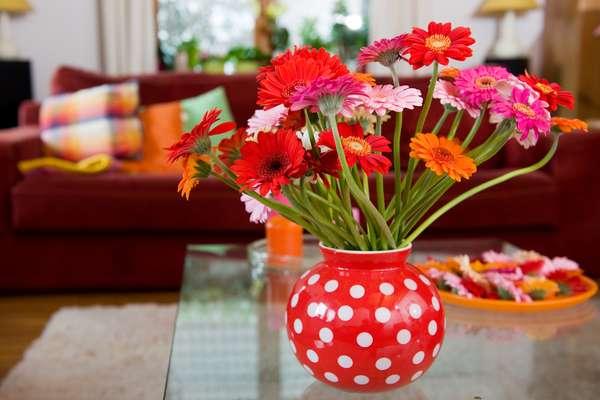 Antes de adquirir uma planta para decorar sua casa, é fundamental conhecer as características delas