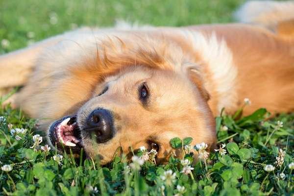 Em meio às altas temperaturas do verão, os cães precisam de cuidados especiais para não sofrerem com a sensação de calor provocada pelos dias quentes típicos da estação