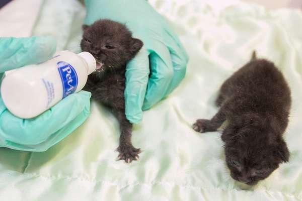 Eles estão recebendo atendimento 24 horas por dia no centro veterinário