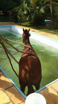 Um cavalo caiu na piscina de uma propriedade rural localizada na rua Paolo Sabatini, no bairro Paisagem Colonial, em São Roque, no interior de São Paulo