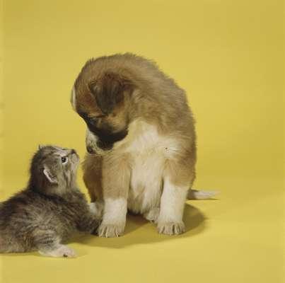 Há mais casas com bichos de estimação do que com criançasNos Estados Unidos, vivem cerca de 150 milhões de cães e gatos, um para cada duas pessoas. Mais da metade de todos os lares contam com um cachorro ou bichano cinco vezes mais do que pássaros, cavalos e peixes combinados. A adoção dos pets quadruplicou desde os anos 1960 duas vezes a taxa de crescimento da população de seres humanos